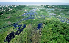 Using Wetlands to Mitigate Climate Change